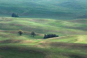 foto av fältet med grönt gräs