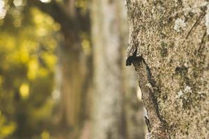 närbild av trädstammen foto