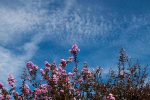 växt med blommor foto