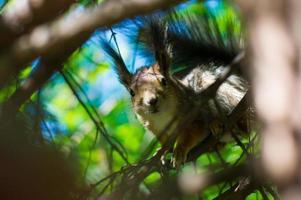 brun ekorre i träd foto