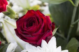 närbild av en röd ros i bukett