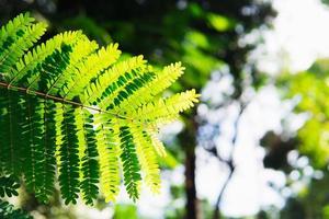 närbild av fern blad