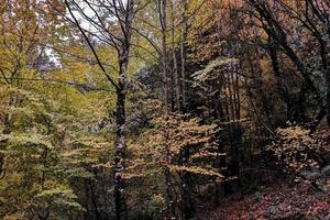 skogsträd under hösten foto