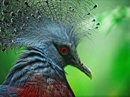 närbild av fågel foto