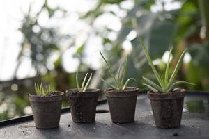 krukväxter i naturliga krukor foto