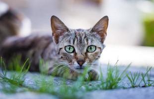 katt som lägger på trottoaren foto