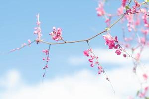 körsbärsblommor i blå himmel foto