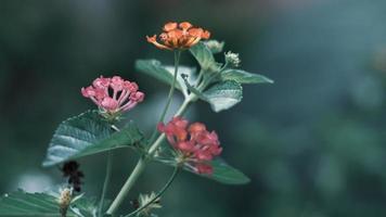 närbild av färgglada blommor foto