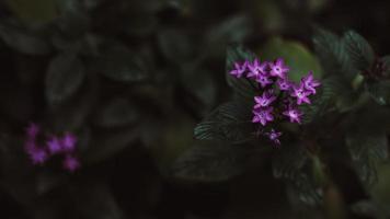 små lila blommor i tropisk skog foto