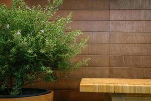 en bänk och grön växt
