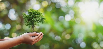 en person som håller ett litet träd i sina händer foto