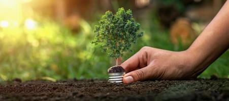 en person som håller en glödlampa på ett grönt träd foto
