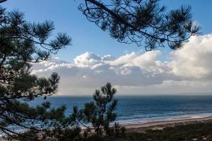 tall trädgrenar och strand med molnig blå himmel foto