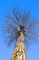 övre grenar träd