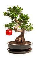 bonsaiträd med stort äpple isolerad på vitt foto