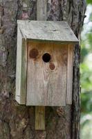 fågelhus i trä som sitter på ett träd foto