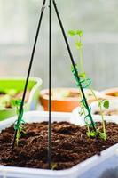 inomhus groddplantor