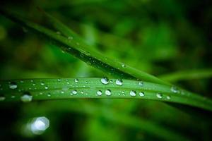 vattendroppar på det gröna gräset. makro foto