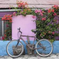 cykel, bougainvillea och ljust målade väggar, Guatemala foto