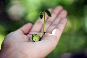hand som håller liten växt foto