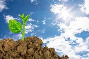 ung grön växt av jord foto