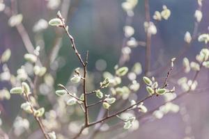 ungt träd foto