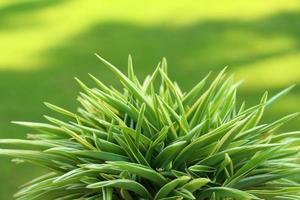 gröna träd i naturen foto