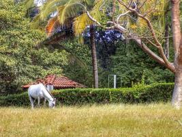 häst bunden till träd foto