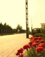 blommor på gatan foto