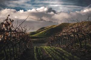 gröna kullar på molnig dag foto