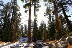 gröna träd på snötäckt mark. foto