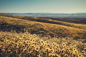 gult blommafält under dagen