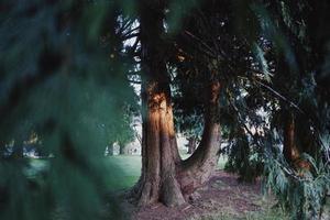 träd och gräs i fältet foto