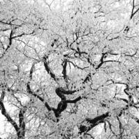 snötäckta trädgrenar foto