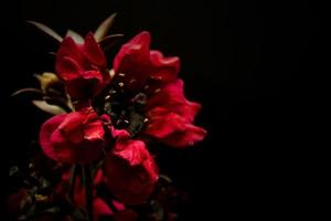 röda blommor som blommar