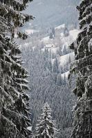 snötäckta träd på vintern foto