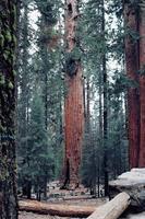gröna och bruna träd foto