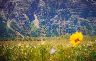 gul petaled blomma på gräsfält