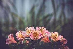 rosa och gula azaleablommor foto