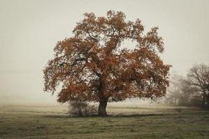 ensamt träd i fältet foto