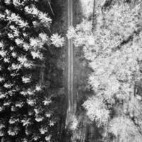 gråskala foto av träd och växter