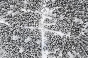uppifrån och ner på träd täckta av snö med vandringsleder