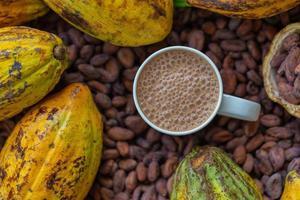 kakaobönor och kakaofrukter
