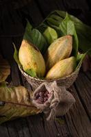kakaofrukt, råa kakaobönor och kakaopulver