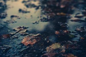 torkade löv flyter foto