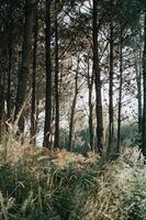 höga träd i skogen foto