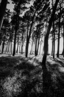 svarta och vita träd foto