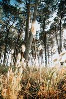 markvy av träden nära stranden foto
