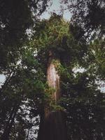 högt grönt träd foto