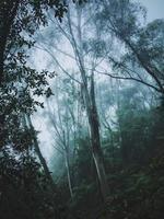 höga gröna träd foto